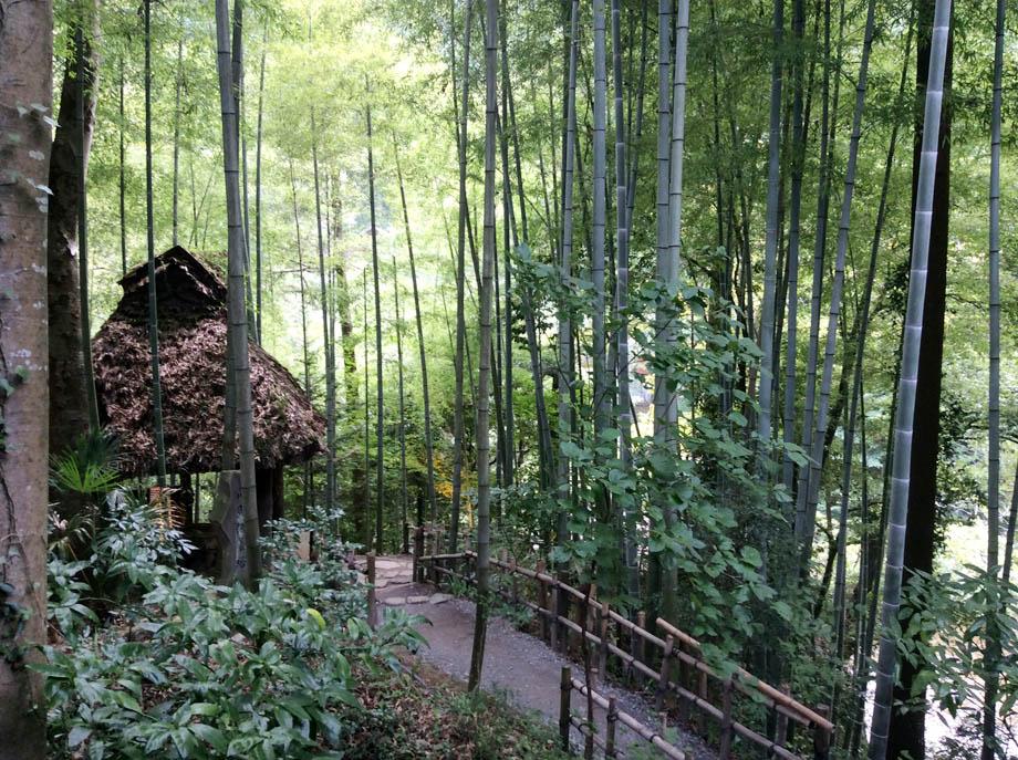 黒茶屋の竹林